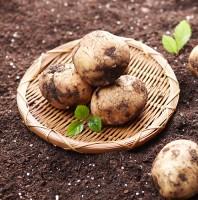 유기농 무농약 수미감자